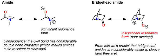 6-bridgeheadamide