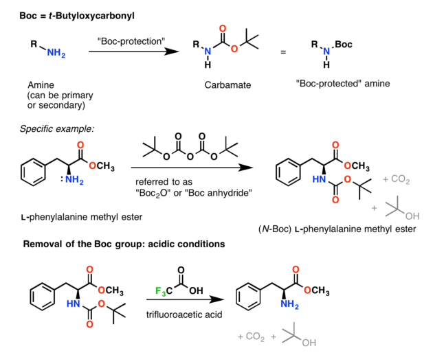 The boc protecting group for amines, installed with Boc2O (boc anhydride) and boc deprotection with trifluoroacetic acid (TFA)