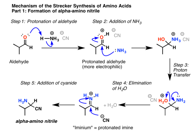 mechanism of the strecker synthesis, formation of the imine followed by addition of cyanide ion to the imine to give an alpha amino nitrile.